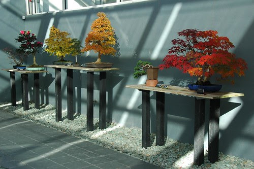 Bonsai, Brooklyn Botanic Garden