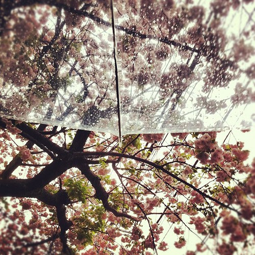 Been raining the entire day, end of cherry blossoms season?