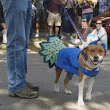 Upcoming Halloween Events that include Your Pets! | Belle Mead Animal Hospital - Veterinary Hospital in New Jersey