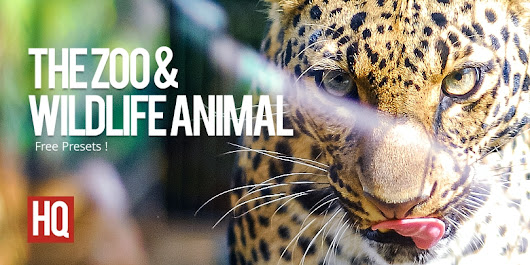 The Zoo Presets | Free Adobe Photoshop Lightroom Presets