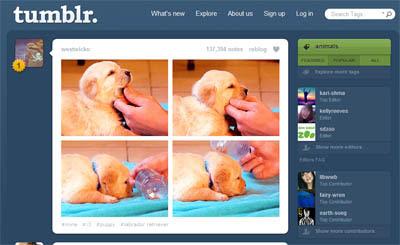 Nomes Para Tumblr Ideias Criativas E Ajudar Accelerated Ideas