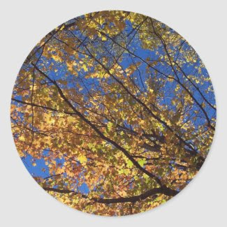 The Branches of fall Round Stickers