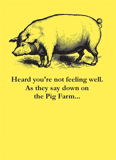 Funny Get Well Card Pig Farm From Cardfoolcom
