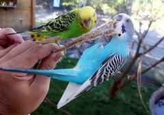 Birds_9510s
