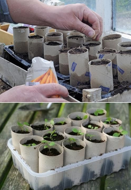 Use toilet paper rolls to start your plants