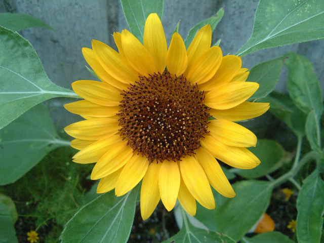 いつも地球とお友達 8月に咲いた花