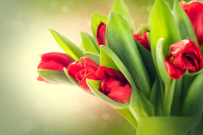 Tulip Flower Meaning Flower Meaning