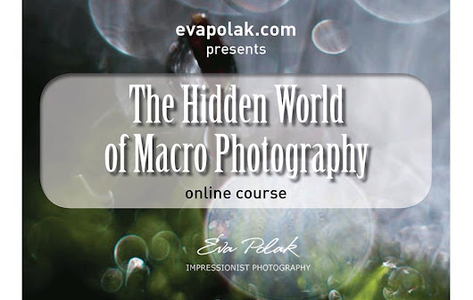 The Hidden World of Macro Photography Workshops with Eva Polak