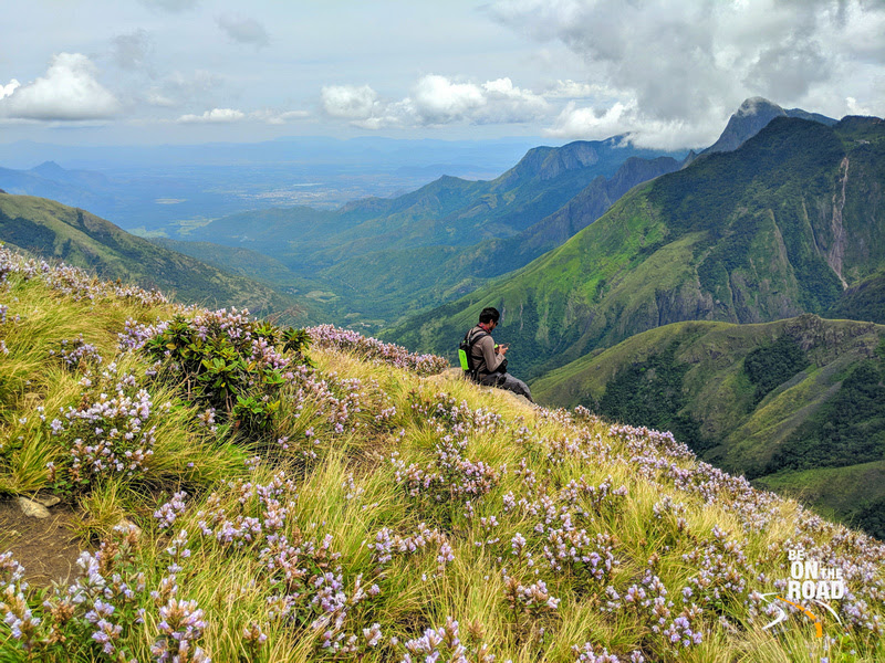 Admiring the Neelakurinji photos while sitting amidst one of the largest blooms of 2018