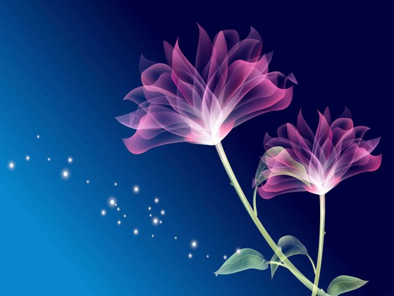 Fondos De Pantalla De Flores Rosas Fondo Azul Wallpapers De Flores