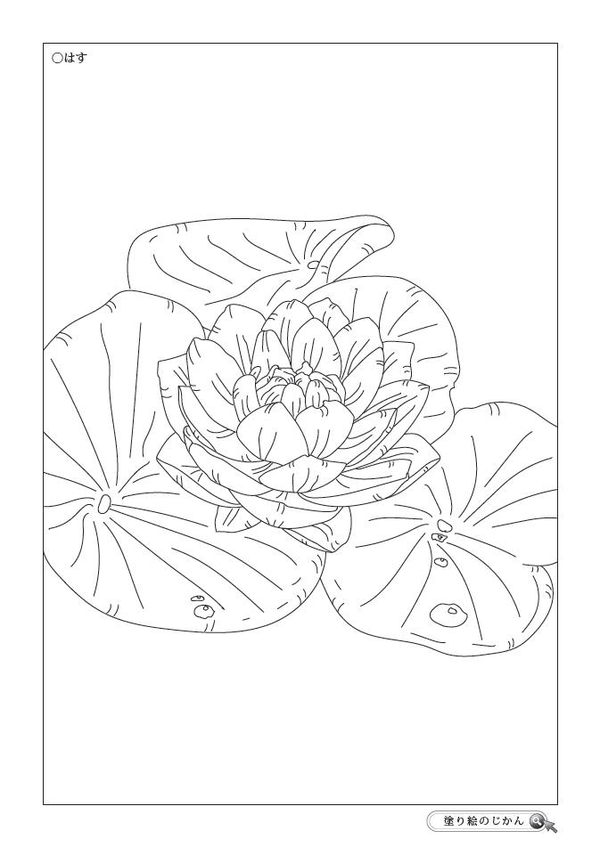 8月の花ぬりえ 塗り絵のじかん