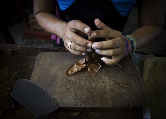 La media por trabajador de la fábrica Francisco Donatién es de 160 tabacos al día. Foto: Irene Pérez/ Cubadebate.