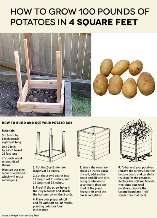 ARTICLE & VISUAL | How to grow 100 pounds of Potatoes in 4 square feet?