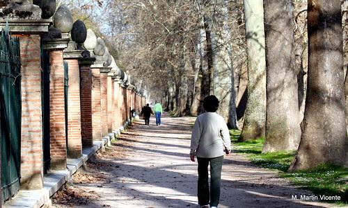 en Aranjuez, filas, hileras, galerías...
