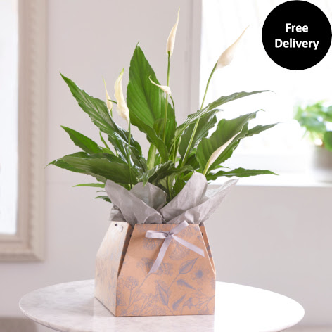 Next Flowers And Gift Cards Delivered Next Day