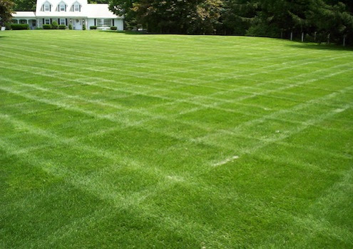 Grass Alternatives - Keep Off the Grass - Bob Vila