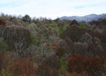 Los árboles centenarios del Hayedo de Montejo de la Sierra están en peligro