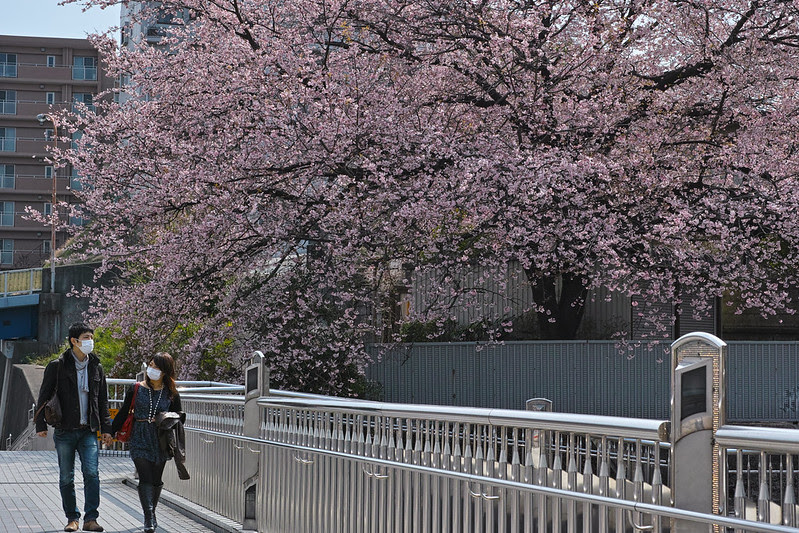 Sakura 2013 - DP3M