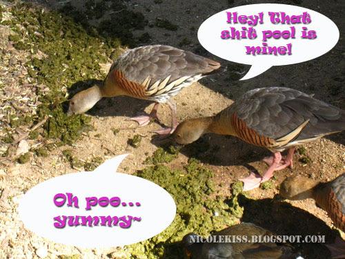 ducks fighting over bullshit