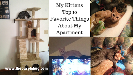 The Kittens Top 10 Favorite Things About My Apartment - The Purple Bug Project