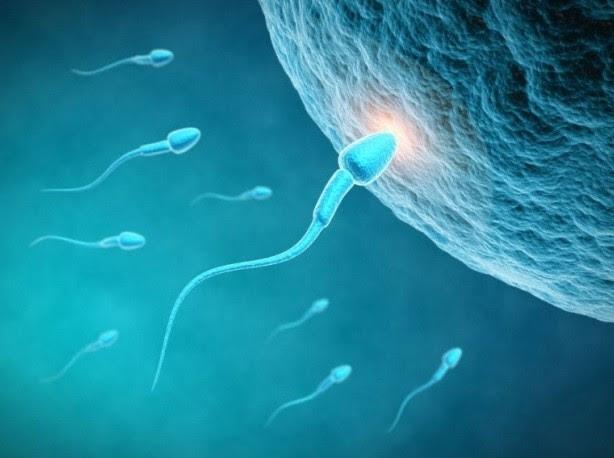 Óvulo sendo fertilizado