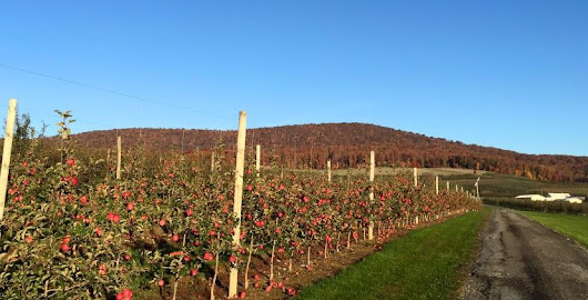 Pick Your Own Apples At Catoctin Mountain Orchard In Maryland