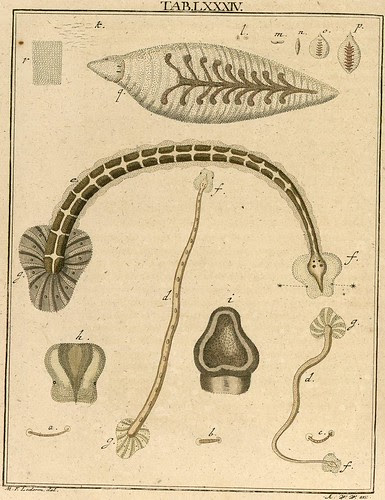 Amusement microscopique MF Ledermuller 1766 2