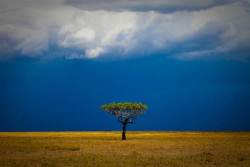 kazanational-park-tanzania-africa-2