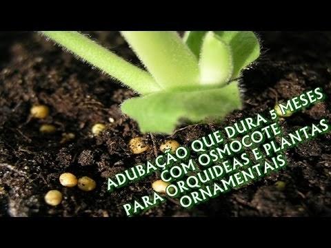 ADUBAÇÃO QUE DURA 5 MESES PARA ORQUÍDEAS E PLANTAS ORNAMENTAIS