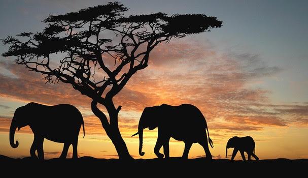 Safári na Tanzânia: Imperdível!  (Foto: Reprodução)