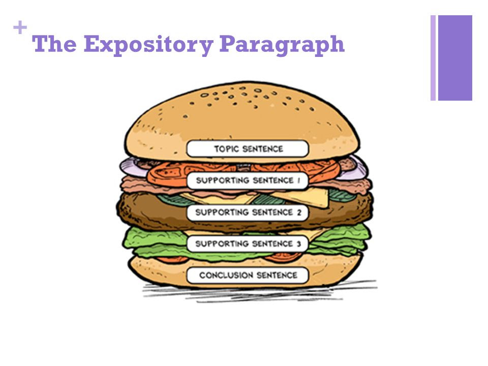 The+Expository+Paragraph