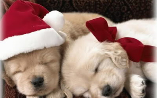 Image: Image - Christmas-Puppy-puppies-15897189-1280-800.jpg | An Awesome ...