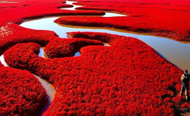 *life in red*
