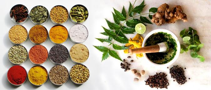 How to grow Herbs an