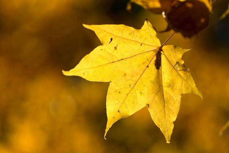 http://www.stuartrichardson.com/yellow-leaf.jpg