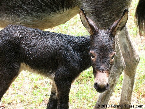 Esmeralda's Baby Boy 14