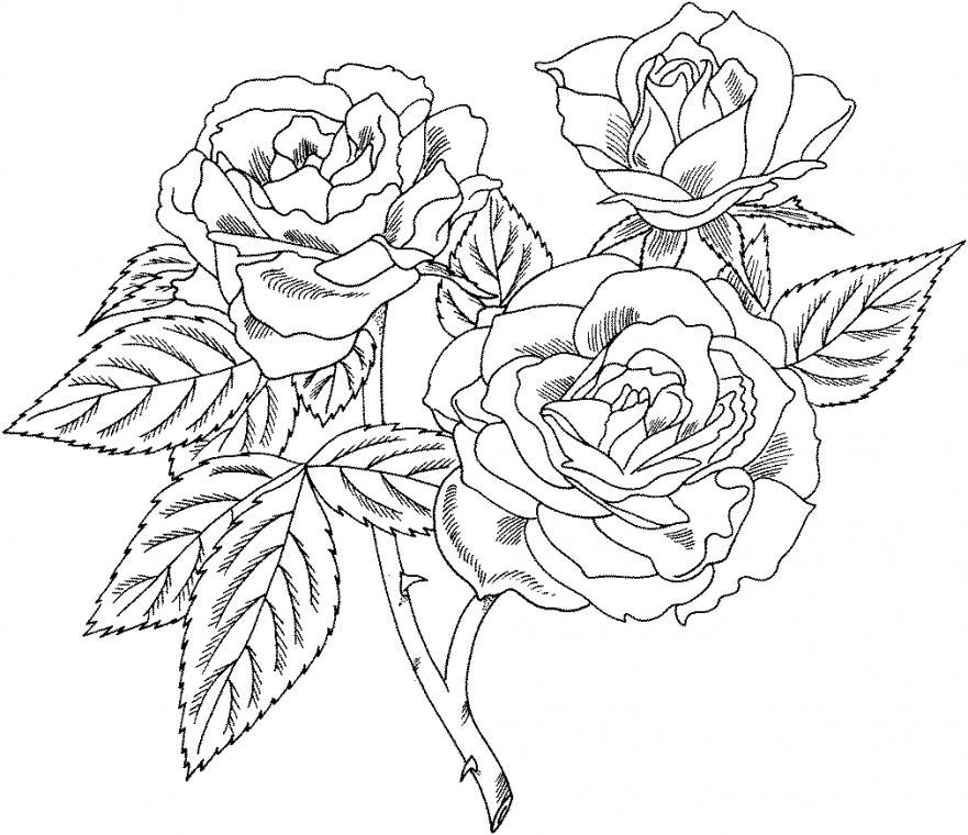Gül Boyama Sayfaları Gül Boyama Resimleri Rose Coloring Pages