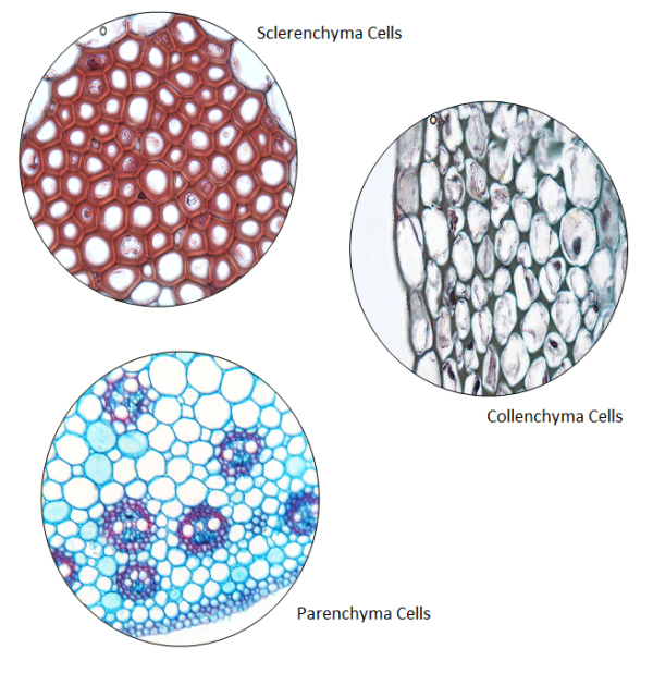 plant_cell_types