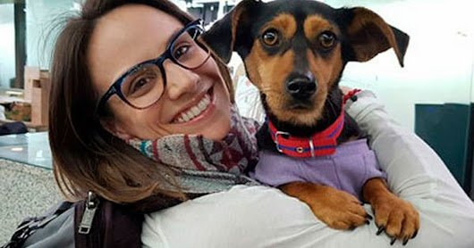 Canadian Olympian On A Mission To Rescue Dogs From Korea