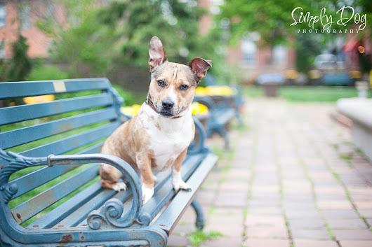 German Village Dog Photography Shoot | Columbus Ohio Dog Photographer