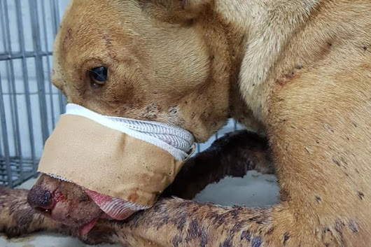 PETITION: Children Blew Up A Firecracker Inside This Dog's Mouth.