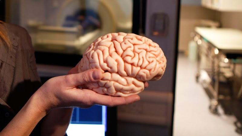 هل صحيح أن الإنسان يستخدم 10% فقط من دماغه ؟