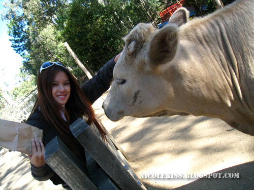me and cow