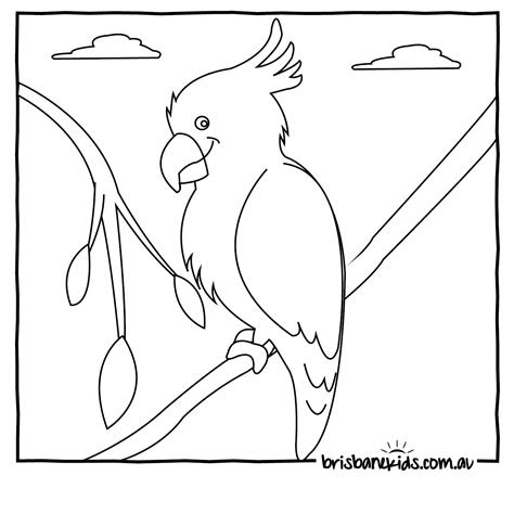 australian animals coloring pages coloring pages