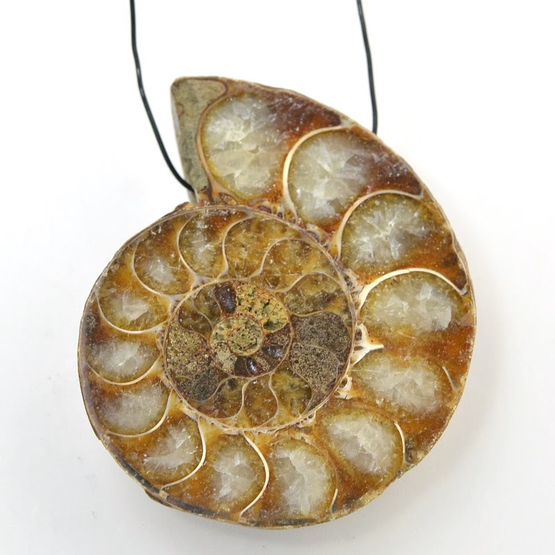 s48844 Stone Pendant - OOAK Sliced Polished Pendant - Ammonite
