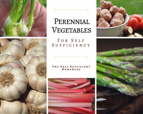Perennial Vegetables for Self Sufficiency - The Self Sufficient HomeAcre