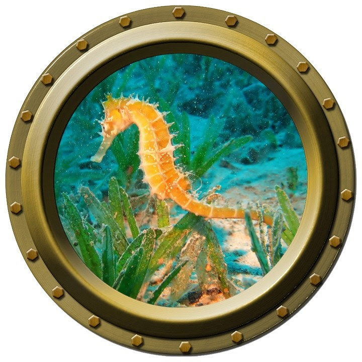 Orange Seahorse Decal
