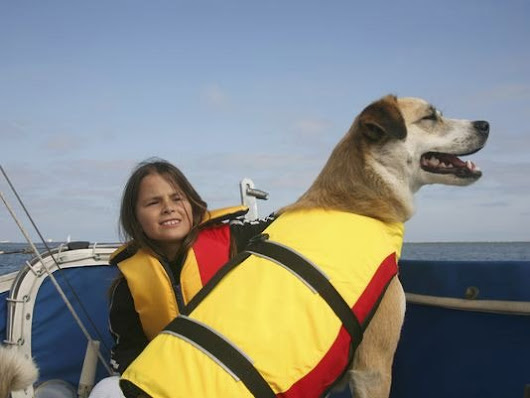 Preparing Bets For Boating Excursions - Pets - BoatUS