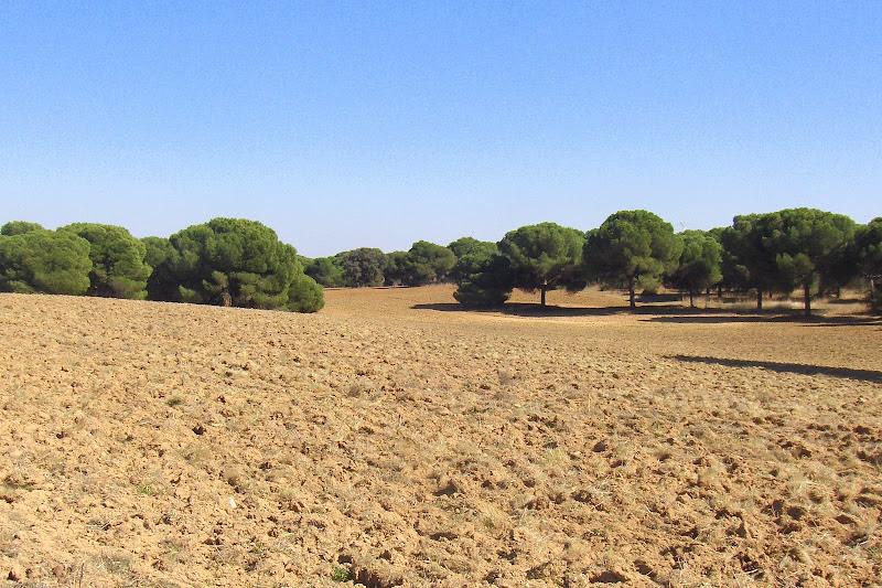 Monte Sacedón