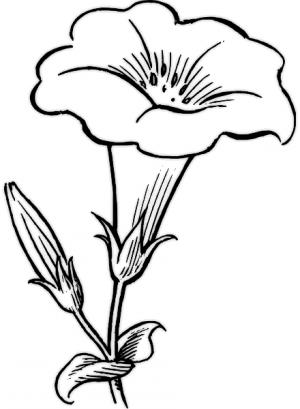 Imágenes Con Dibujos De Flores Imágenes